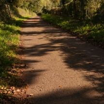 Path-1667