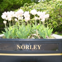 norley-0322